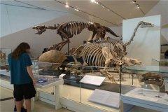 澳洲南方龙:蜥脚下目恐龙的一种食草恐龙