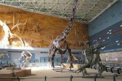 北方龙:辽宁的巨型食草恐龙(化石首次发现于中国辽宁)