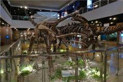 恶灵龙:驰龙科里的恶魔(生活在白垩纪时期的恐龙)