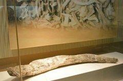 三星堆为什么有象牙:祭祀品(可能来自巴蜀和成都平原)