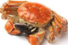 螃蟹有多少个品种:六百多种(分为海蟹和淡水蟹)