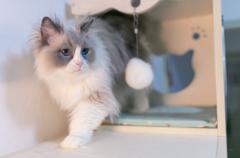 为什么母猫会吃掉自己的幼崽:许多原因(小猫沾了气味)