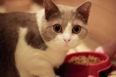 猫咪为什么会厌食:有很多原因(胃口不好,挑食,生病)