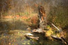 世界上最可怕的沼泽:美国的曼查克沼泽地(幽灵沼泽)