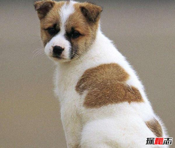 养狗第一天就后悔了?狗狗不能吃的10种食物