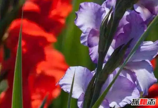 什么花在夜晚开放?十大只在夜间开放的花朵