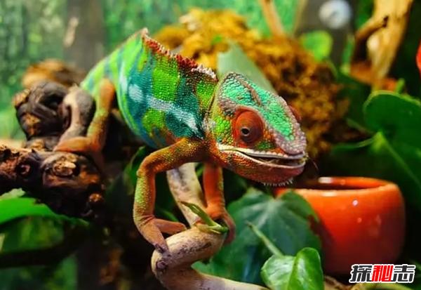 会变色的动物有哪些?世界十大神秘变色动物