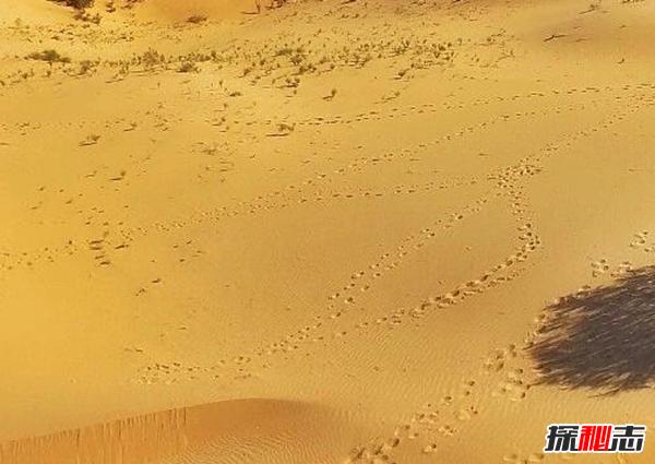 沙漠植物有哪些?盘点沙漠十大最耐旱的植物