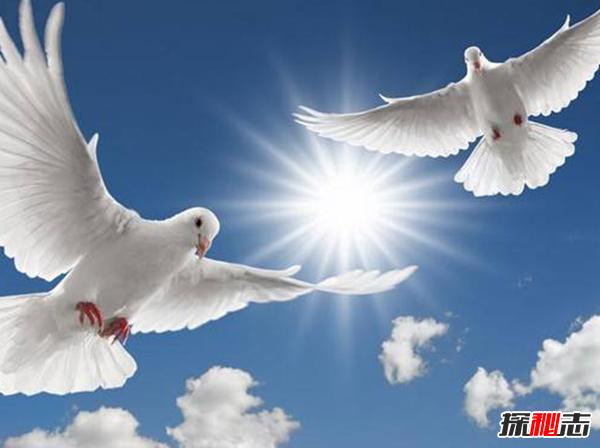 哪个国家最和平?盘点世界十大和平国家(附和平指数)