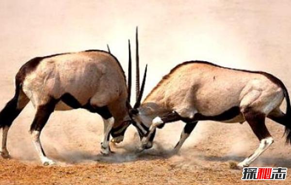 动物中十大奇特有趣的现象,第四种动物能提前感觉地震