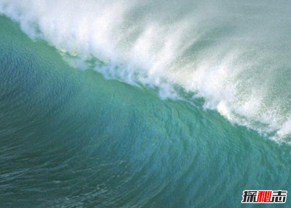 速度造就了成功!海洋中十大速度最快的动物