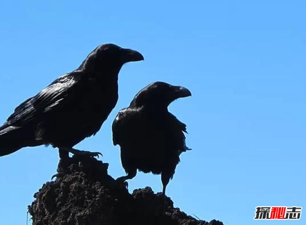 世界上什么动物最聪明?动物智商排名前10名