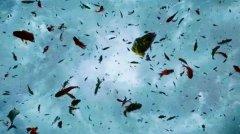 世界上真的有鱼雨吗?成千上万活鱼从天而降怎么回事
