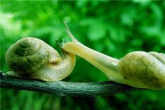蜗牛的祖先在岩石中被发现 生活于5亿年前(长有120颗牙)