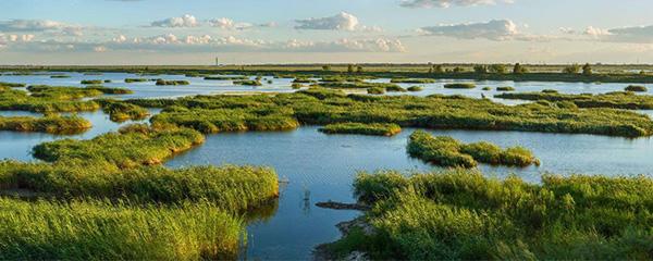 湿地是什么意思?