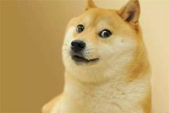 柴犬(quan)的祖(zu)先(xian)是什麼