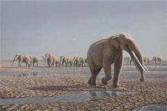 稜齒(chi)象或是大象的祖先,因環fang)塵ju)變滅絕(適應(ying)能力(li)差)