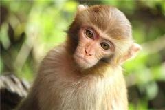 無限猴子理論(lun)起源(yuan)于一(yi)本書(shu) 講述背後的概率