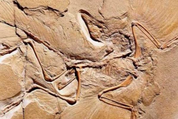 恐龙和鸟类本身就有着非常近的亲缘关系