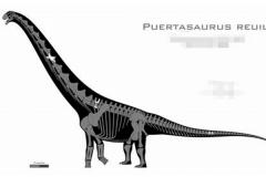 瑞氏普尔塔龙:拥有最宽蜥脚类脊椎(宽1.6米/体长30米)