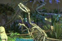赵氏怪脚龙:山东小型恐龙(长3米/后肢骨骼怪异)