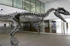戈瓦里龙:南美大型肉食恐龙(拥有小短手/长6-7米)