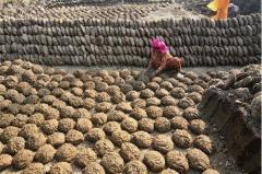 为什么印度人吃牛粪饼 新鲜牛粪手工制成网站爆款商品
