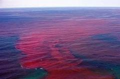赤潮和水华的主要危害:赤潮破坏海洋生态(水华污染饮用水)