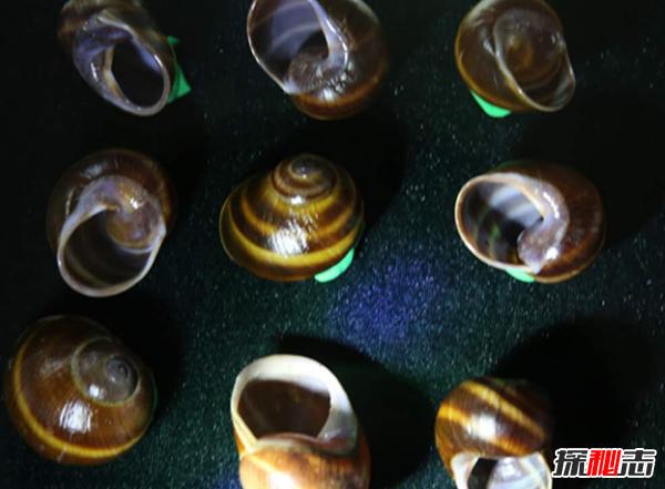 蜗牛壳碎了还能活吗?世界上十大最奇特的蜗牛