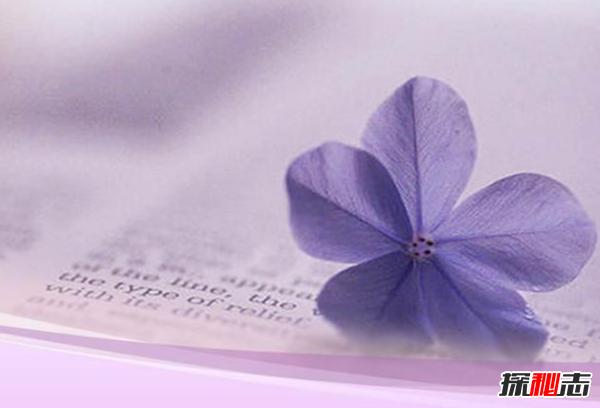 世界上十大最高贵神秘的花,你肯定都没听说过(附图)