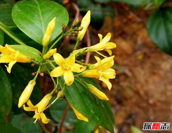 什么花有毒却很美?盘点世界十大最美的毒花(附图)