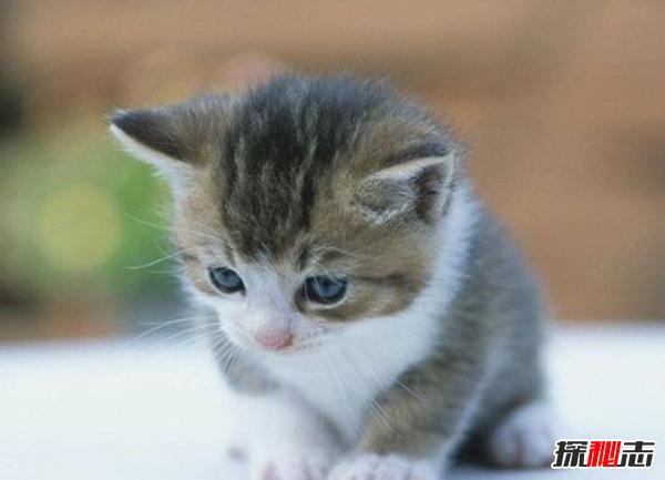 猫恨主人有什么表现?猫咪恨主人的十种表现