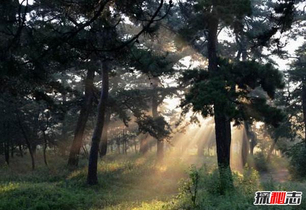 山海经中十大神树,第五种树可让人长生不老(附图片)
