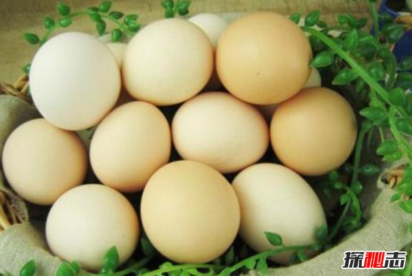 鸡蛋最多有几个黄?史上最多蛋黄的鸡蛋