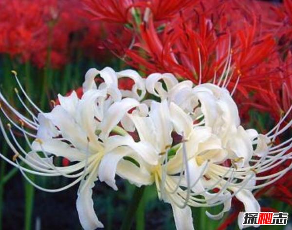 自然界致命植物有哪些?盘点世界十大毒王植物