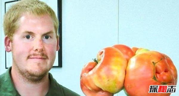 最大的西红柿有多少斤?揭秘世界上最大的西红柿(附图)