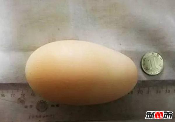 一枚鸡蛋约重多少克?揭秘世界上最大的鸡蛋