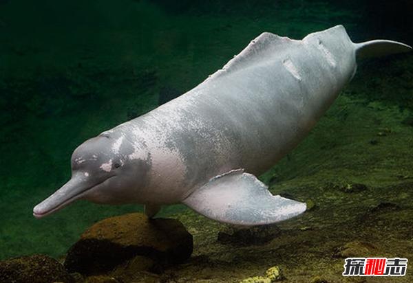 最大的河豚有多大?世界上最大的河豚(体色多样)