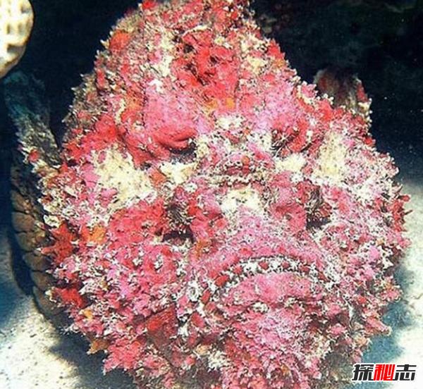 已知最毒海洋生物之一:毒液数分钟内置人死亡