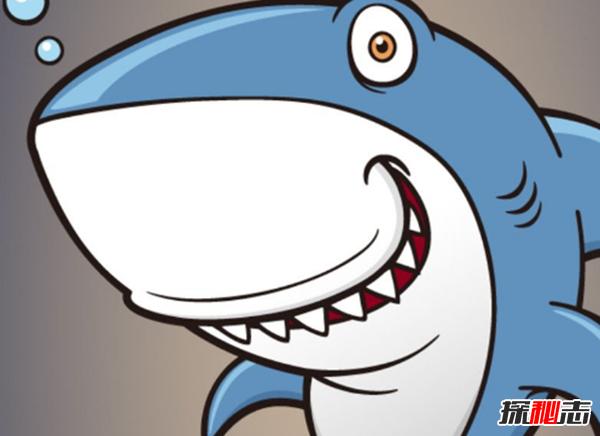 世界十大对人无害的鲨鱼,鲸鲨美誉为温和的巨人(13吨)