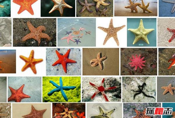 关于海星的十大有趣特征,平均寿命高达35年(无大脑血液)