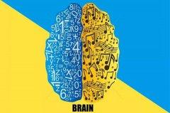 左脑和右脑有区别吗?左脑右脑哪个更发达的人聪明些