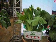 世界上最贵的五大蔬菜 第一接近63万元一颗独一无二