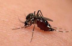 蚊子是什麼動(dong)物類型 它由哪些(xie)特別的生(sheng)活習性