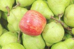 苹果和梨能一起吃吗?苹果和梨搭配一起营养更佳