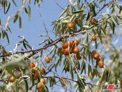 五大防风固沙植物:保护沙漠的必备植物(蚂蚁森林常见)