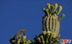 沙漠中最常见五大植物:第一家庭常见第三可食用美容