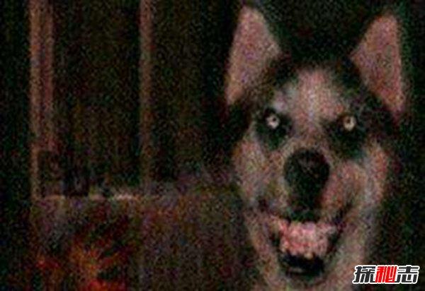微笑狗事件是真的吗图片