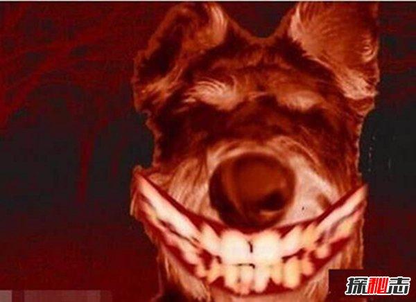 微笑狗事件视频图片