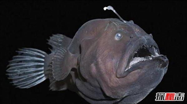 十大恐怖鱼图片